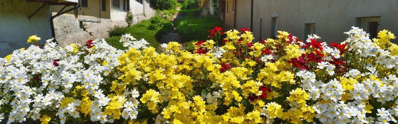 Hier finden Sie besondere Fotos von Levico Terme: Die schönsten Eindrücke von Natur und Kultur in Levico Terme.
